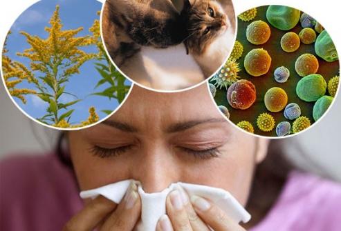 Причины аллергии на щеках и ушах
