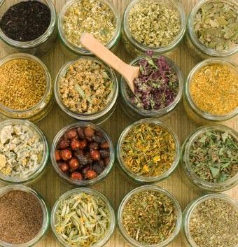 Травы для приготовления лекарства от болезни печени