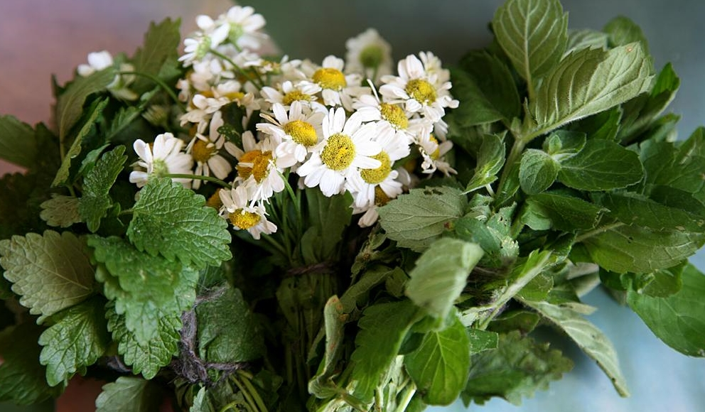 Цветы ромашки и мята