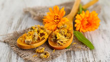 Сушеные и живые цветки календулы