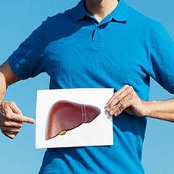 Фото: Человек держит картинку с изображением печень