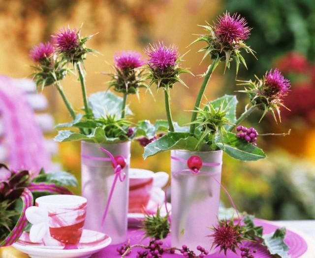 Цветы расторопши в стаканах на столе